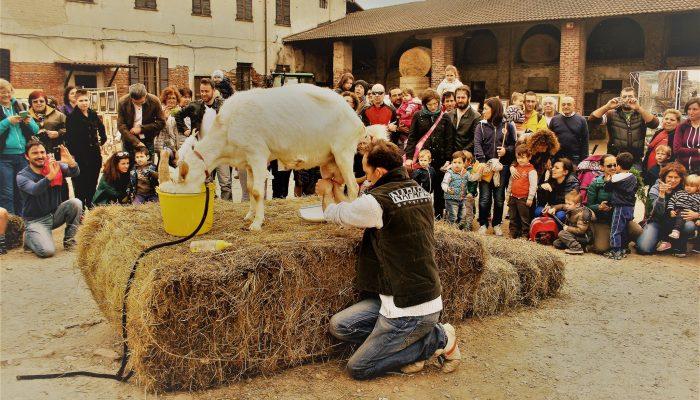 """iniziativa didattica in Caldera durante """"Cascine aperte"""""""